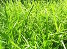 Further Progress on the new Irish Grass Growth Model