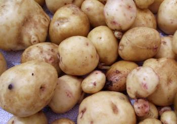 Validity of Irish Potato Blight Rules