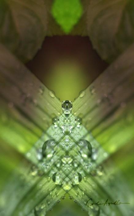 leafdrop3