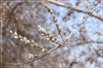 IMG_3067_Fotor