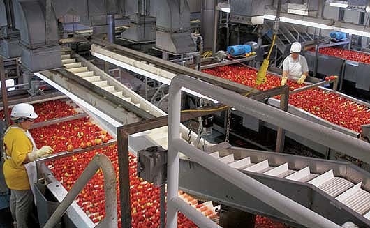 California Processing Tomato Report, tomatoes, food processing