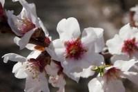 sabrina-flowers