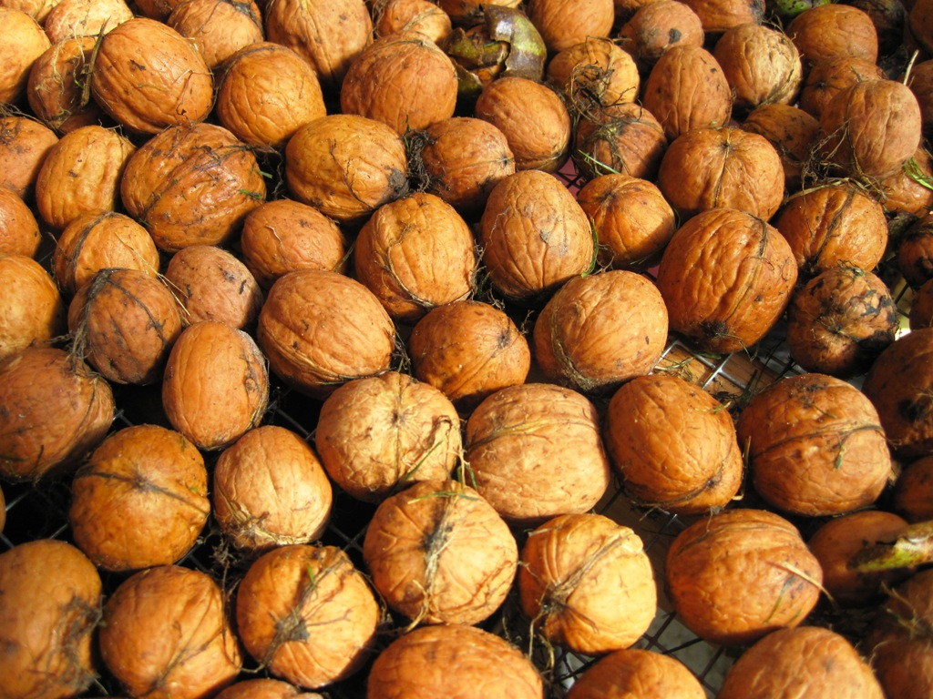 Growers Set for Sizable Walnut Harvest