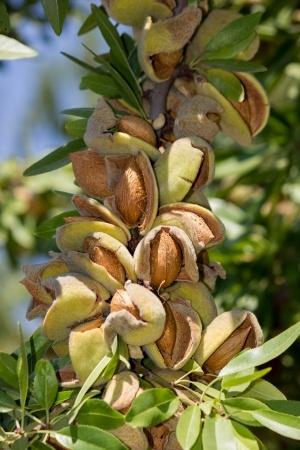 Almond Shipments