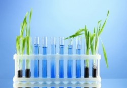 chemical test tubes with plants
