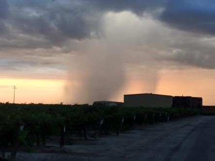 Rare July rains across the state. Courtesy: Gurpinder Brar