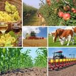 farm production