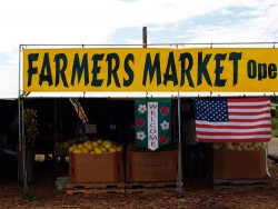 Small Farmers Market Selling Fruits and Vegetables