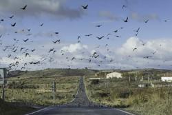 Migrating birds road