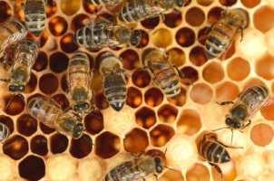 pollinator problem