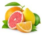 citrus crop forercast