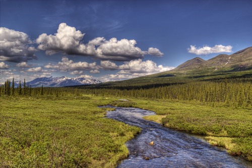Alaskan creek in summer near the Denali Highway with puffy clouds on a summer day.