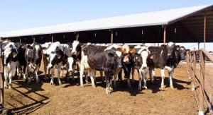 cost milk production california