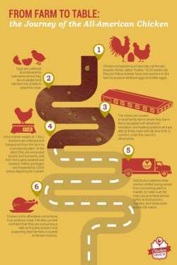 Infographic Journey of All American Chicken