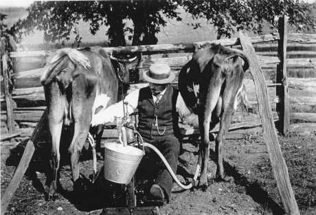 Mehring milking machine. USDA Bureau of Dairy Industry Records. Special Collections, National Agricultural Library.
