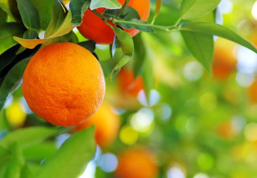 California citrus crop forecast
