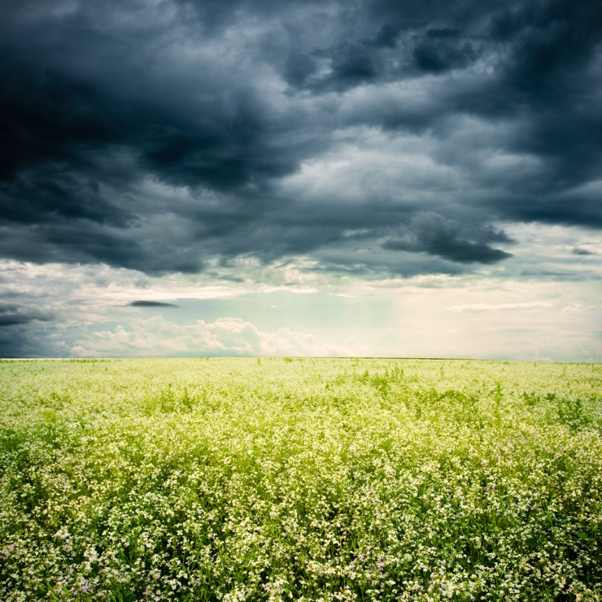 bad weather above the white flowers field