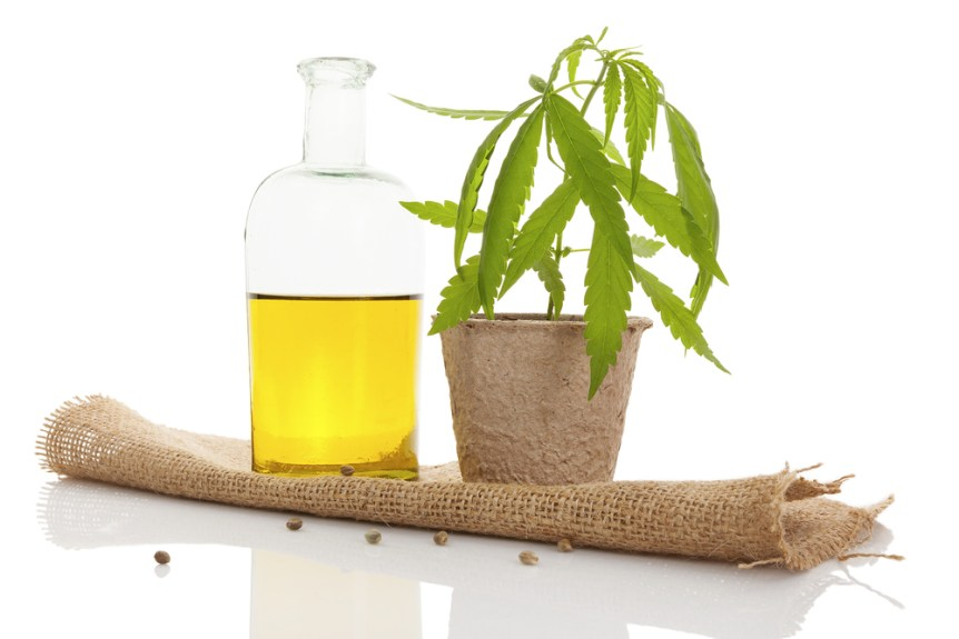 Cannabis oil and young cannabis plant