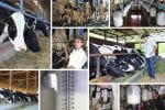 Dairy farm, collage program