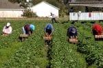 farm labor shortage