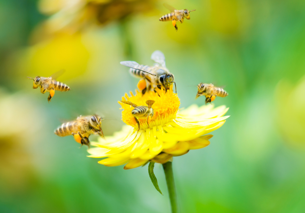 Image result for bees, flowers