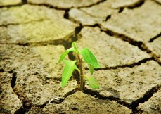 Climate Strategies
