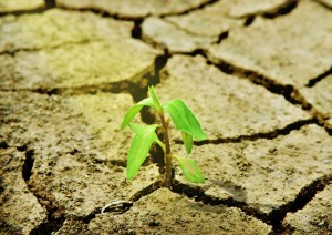 Food and Agriculture Climate Alliance - FACA