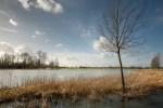Flooded fields- Louisiana