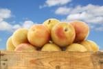Fresh pluots (Prunus salicina - armeniaca) fruit