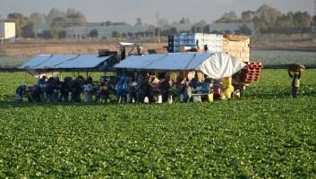 agricultural workforce