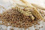Whole grain wheat kernels - Japan