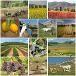 American Agriculture industry collage