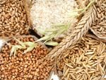 corn-kernel-seed-meal-and-grains-in-bags-2-china