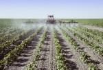 Pesticide Pilot Program