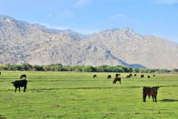 California cattle ranch conservation