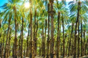 Sunny Palms Plantation