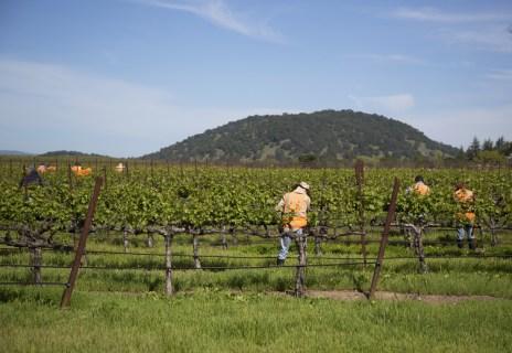 Vineyard Mechanization