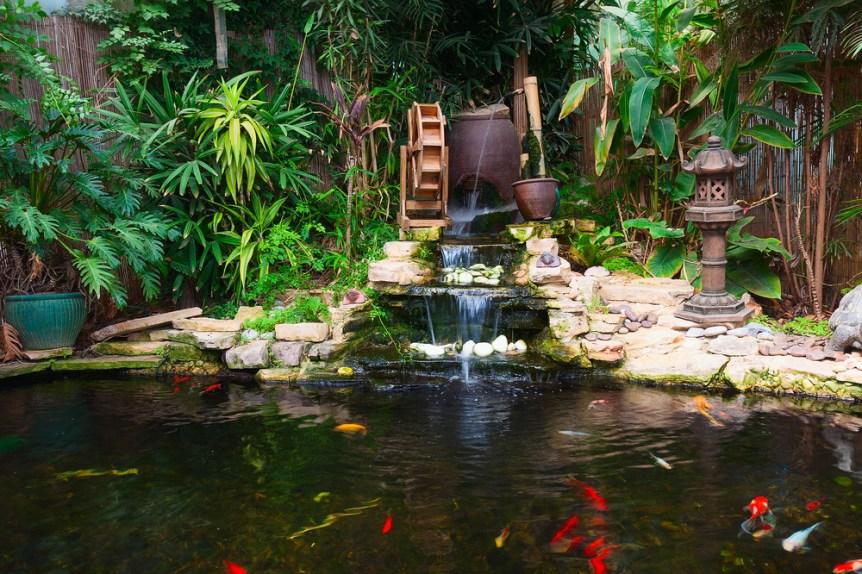 pond farm garden