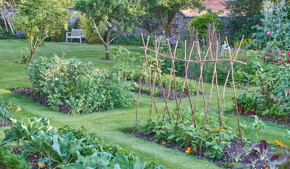 In Planning Your Garden, Cathy Isom Tells Us About Some Superfoods You Can  Grow At Home. Thatu0027s Coming Up On This Land Of Ours.