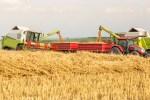 trump trade grains