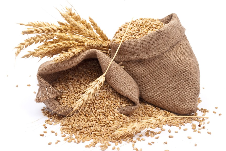 General Mills wheat research