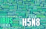 h5n8 bird flu concept