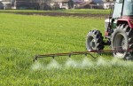 Tractor spraying wheat field with sprayer, dicamba pesticides and herbicides
