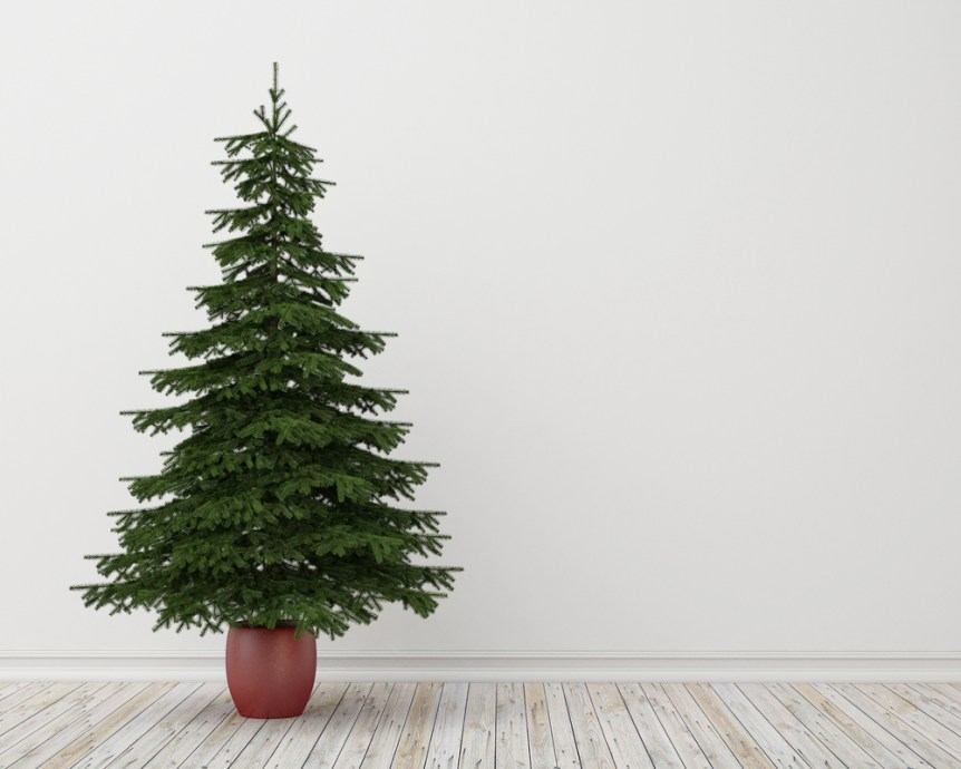 Oh christmas tree what to do with that christmas tree for How did the christmas tree come about