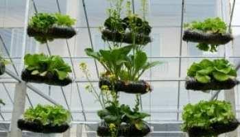 Vertical Garden Ideas Southeast Agnet