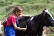 veterinary funding