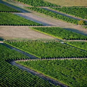 Crop Insurance Flexibilities