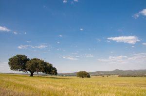 rabobank wheat acres