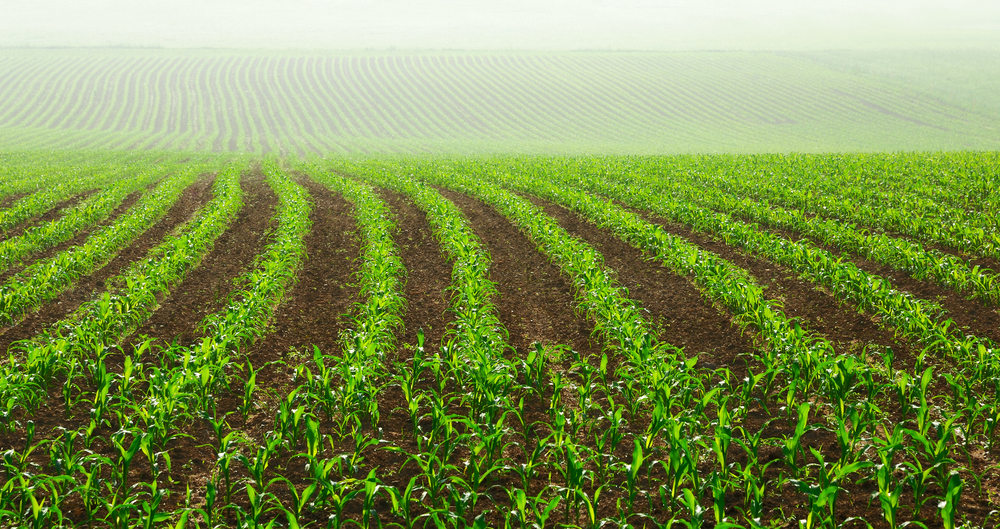 Agri View: Crop Prospects