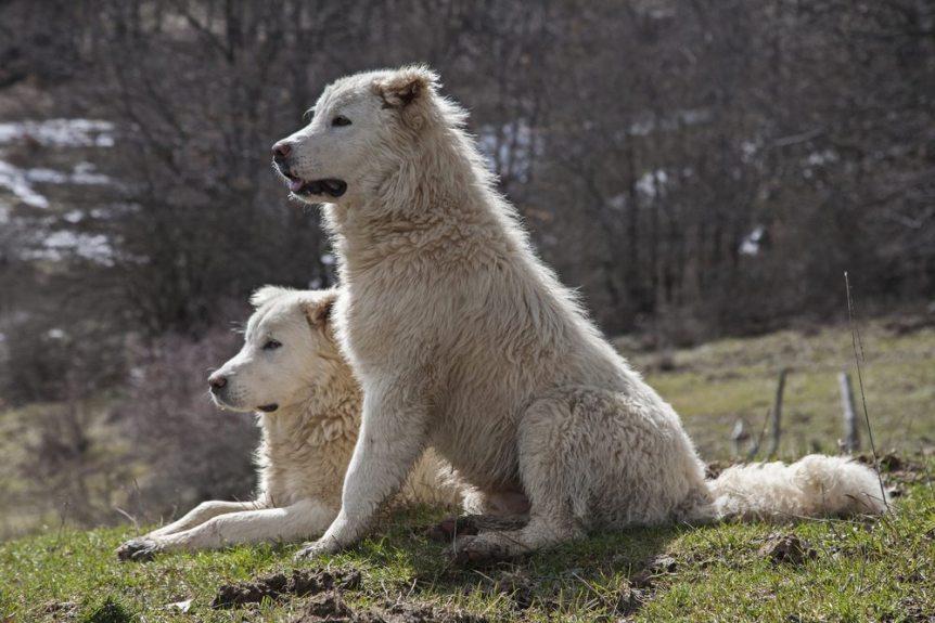 best breeds